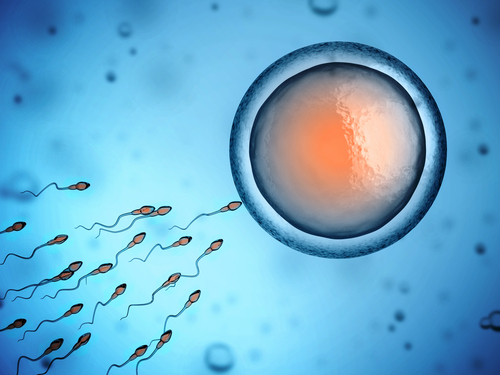 after vasectomy sperm will not reach the egg